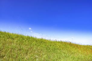 【自然風景】透き通った青空の下の草原の丘 背景素材の写真素材 [FYI04844580]