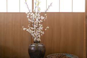 障子と桜の写真素材 [FYI04844729]