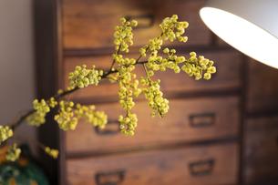 ライトに照らさせた花の写真素材 [FYI04844731]