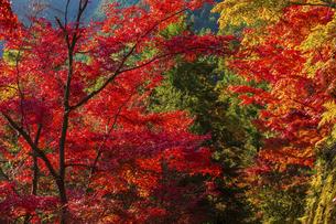 紅葉した吉野山の写真素材 [FYI04844932]