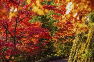 紅葉した吉野山の写真素材 [FYI04844935]