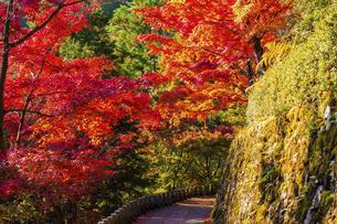 紅葉した吉野山の写真素材 [FYI04844936]