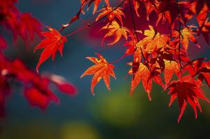 紅葉した吉野山の写真素材 [FYI04844937]
