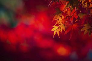 紅葉した吉野山の写真素材 [FYI04844939]
