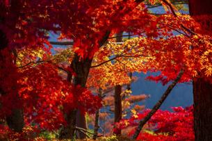 紅葉した吉野山の写真素材 [FYI04844940]