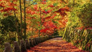 紅葉した吉野山の写真素材 [FYI04844942]