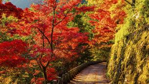 紅葉した吉野山の写真素材 [FYI04844945]