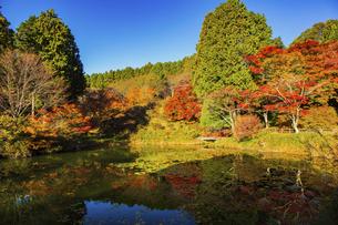 秋の鳥見山公園の写真素材 [FYI04844954]