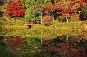 秋の鳥見山公園の写真素材 [FYI04844962]