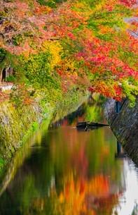 京都 紅葉した哲学の道の写真素材 [FYI04845010]