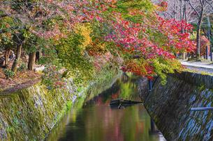 京都 紅葉した哲学の道の写真素材 [FYI04845011]