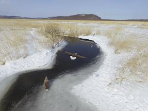 空撮・釧路湿原のオジロワシとタンチョウ(北海道・標茶町)の写真素材 [FYI04845269]