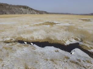 空撮・冬の釧路湿原とタンチョウ(北海道・標茶町)の写真素材 [FYI04845273]