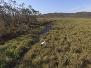 空撮・秋の釧路湿原とタンチョウ(北海道・鶴居村)の写真素材 [FYI04845275]