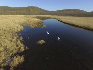 空撮・秋の釧路湿原とタンチョウ(北海道・鶴居村)の写真素材 [FYI04845278]