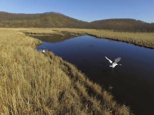 空撮・秋の釧路湿原とタンチョウ(北海道・鶴居村)の写真素材 [FYI04845287]
