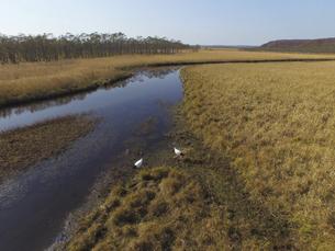 空撮・秋の釧路湿原とタンチョウ(北海道・鶴居村)の写真素材 [FYI04845290]