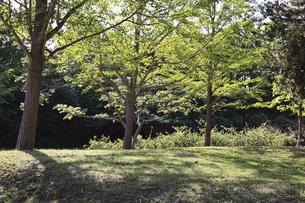 木立の影の写真素材 [FYI04845357]