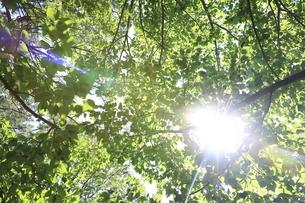 初夏の木漏れ日の写真素材 [FYI04845360]