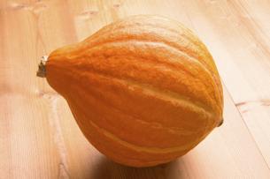 かぼちゃ 品種はコリンキーの写真素材 [FYI04845387]