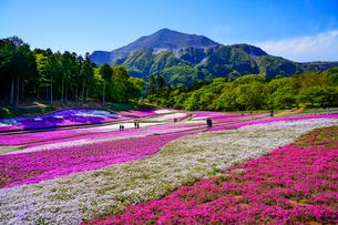 武甲山と青空と芝桜の丘の写真素材 [FYI04845556]