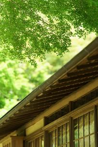 青紅葉と書院の窓の写真素材 [FYI04845557]