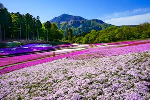 武甲山と青空と芝桜の丘の写真素材 [FYI04845561]