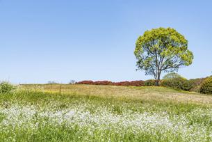 一本の木と野原の写真素材 [FYI04845932]