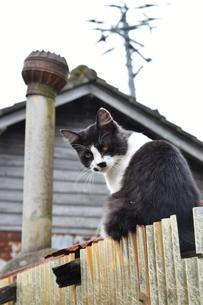 田代島の猫の写真素材 [FYI04845958]