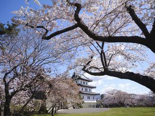 松前城と桜の写真素材 [FYI04845984]