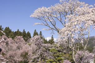 遥かに宝剣岳を臨むの写真素材 [FYI04846115]