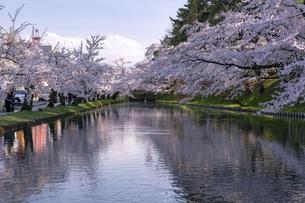 弘前市 弘前公園の満開の桜の写真素材 [FYI04846143]