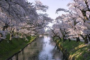 弘前市 弘前公園の満開の桜の写真素材 [FYI04846145]