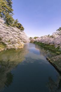 弘前市 弘前公園の満開の桜の写真素材 [FYI04846153]