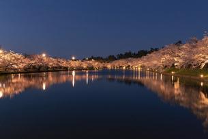 弘前市 弘前公園の満開の夜桜 (ライトアップ)の写真素材 [FYI04846160]