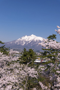 残雪の岩木山と桜の風景の写真素材 [FYI04846308]