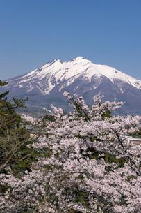残雪の岩木山と桜の風景の写真素材 [FYI04846317]