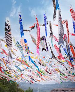大阪府高槻市の芥川桜堤公園の鯉のぼりの写真素材 [FYI04846355]
