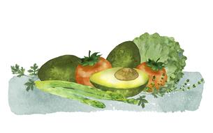 アボカドと野菜とハーブの水彩画のイラスト素材 [FYI04846748]