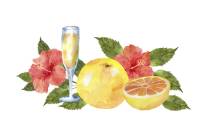 グレープフルーツとハイビスカスとジュースのイラスト素材 [FYI04846750]