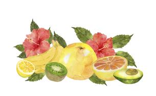 果物とハイビスカスの水彩画のイラスト素材 [FYI04846751]