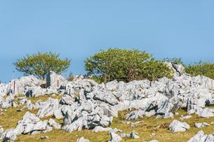 【自然風景】青空の下の四国カルストの写真素材 [FYI04846798]