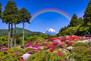 箱根の美しいツツジ庭園の写真素材 [FYI04846954]