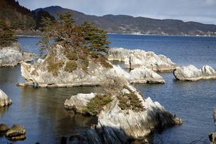 【地学教材】2月  三陸海岸の大理石海岸の写真素材 [FYI04847078]