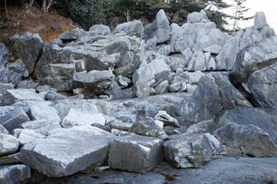 【地学教材】2月三陸海岸の大理石海岸 -古生代大理石の石切り場-の写真素材 [FYI04847082]