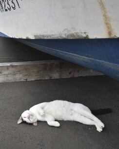 田代島の猫の写真素材 [FYI04847090]