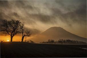 双子のサクランボの木の写真素材 [FYI04847097]