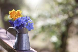 ブリキ缶に活けた水仙、ムスカリとデルフィニウム の写真素材 [FYI04847290]