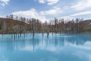 春の青い池2021の写真素材 [FYI04847326]