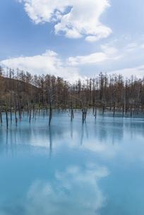 春の青い池2021の写真素材 [FYI04847327]